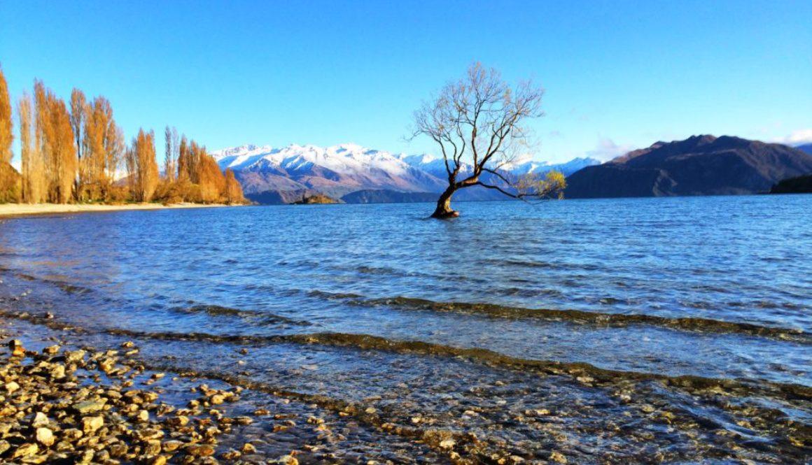 #thatwanakatree, Wanaka NZ
